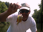 Even the bream were biting the bass lures.